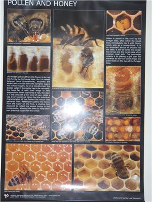 Poster - Pollen and Honey